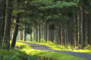 20472568 - green forest path