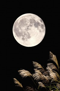 43025857 - full moon and japanese pampas grass
