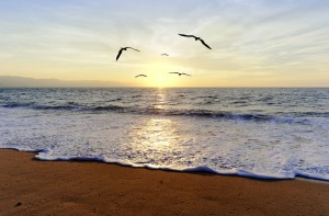 Ocean Sunset Birds